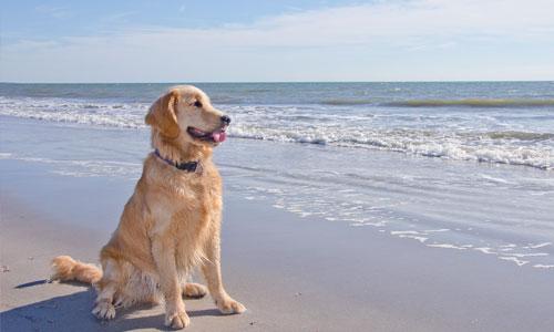 Pet Friendly Vacation Rentals