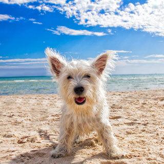 Pet Friendly Rentals in Sunset Beach